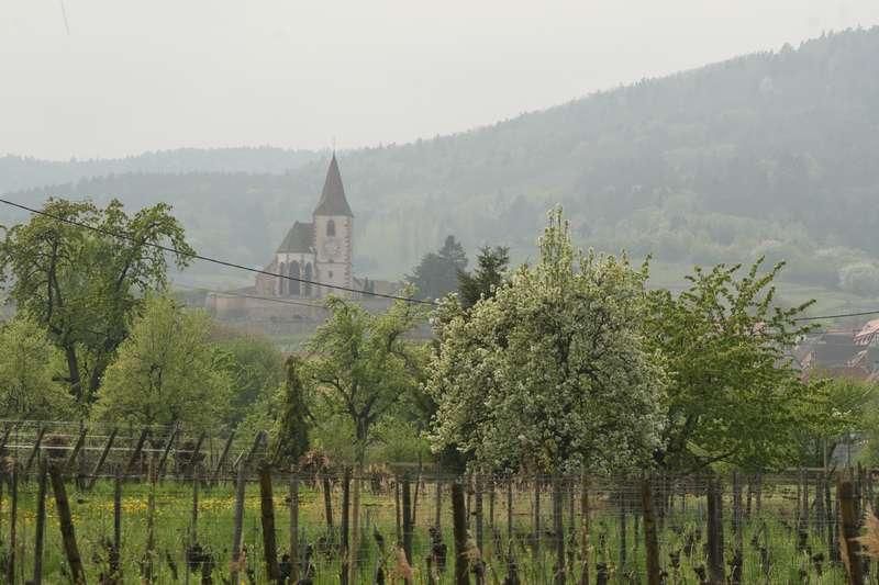 humawihr-elzas-frankrijk-kerk-druiven