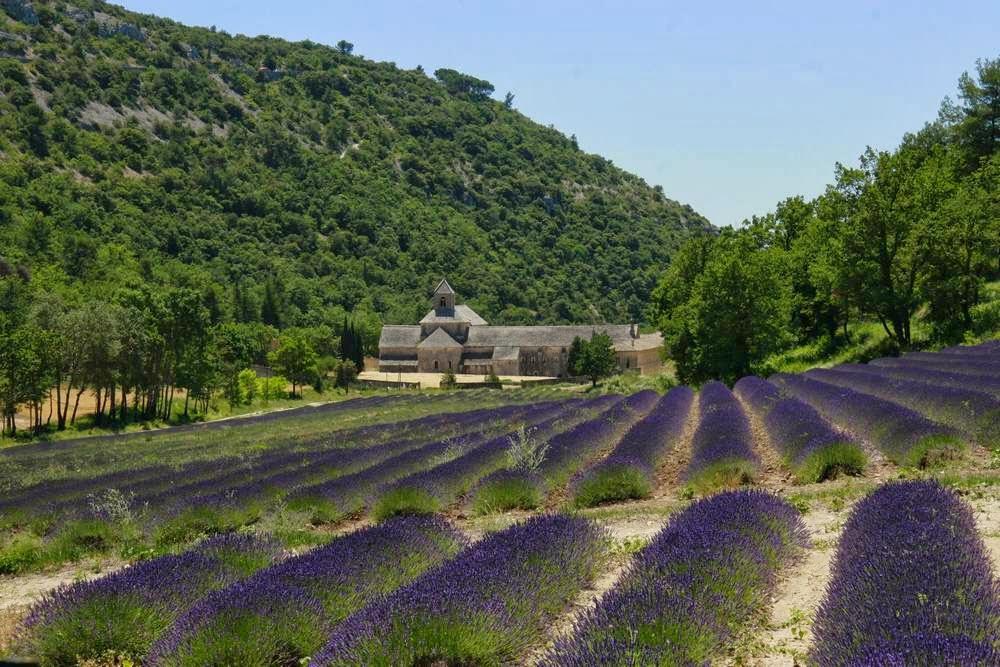 Klooster Senanque tussen de lavendelvelden in de Vaucluse