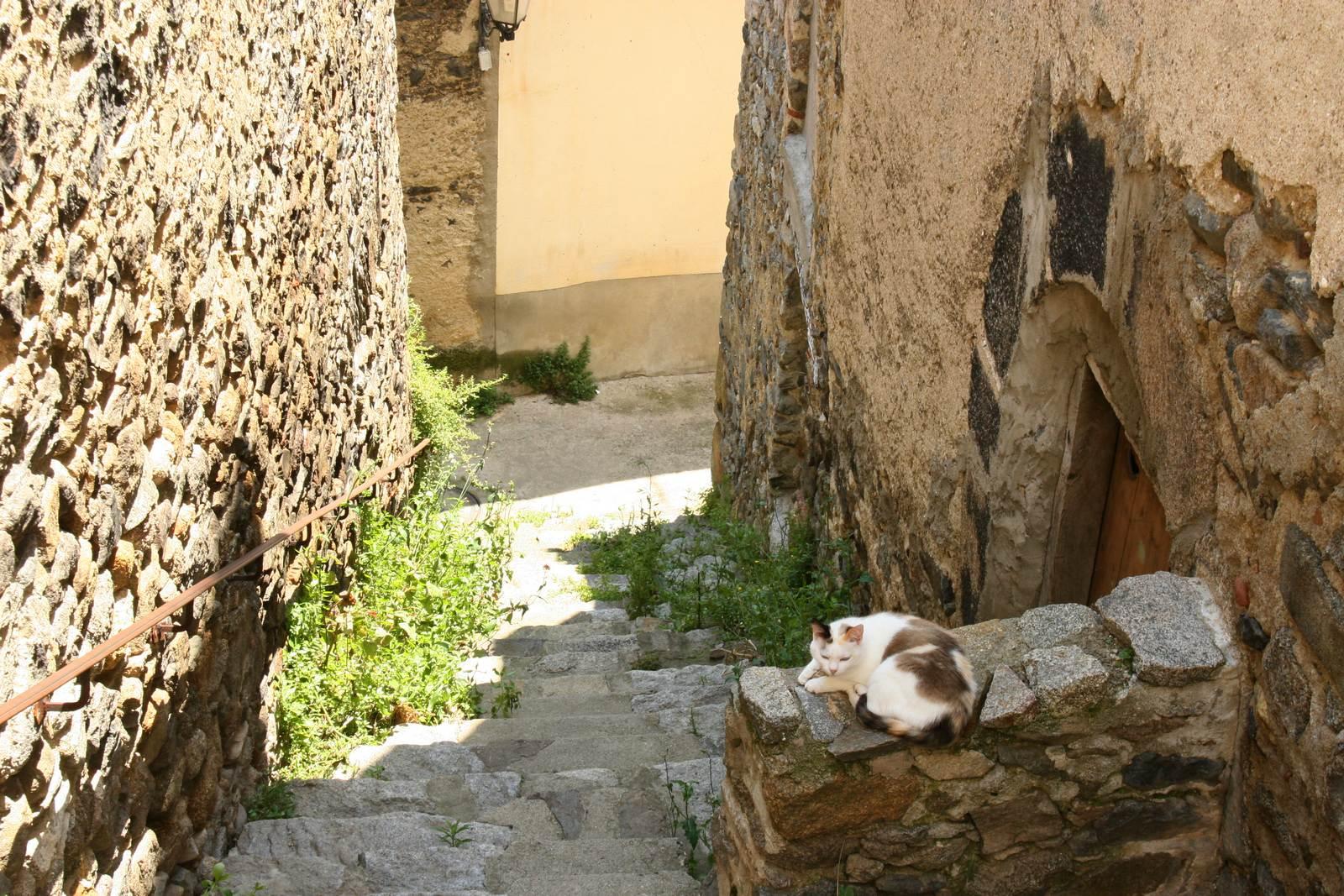 Een poes ligt te slapen in één van steile steegjes van Mosset