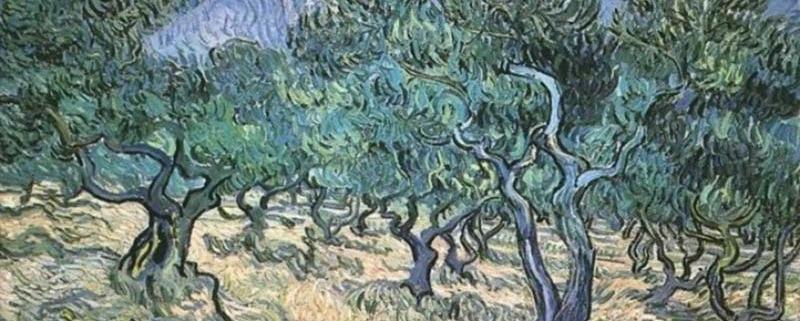 Schilderij met olijfbomen van Van Gogh