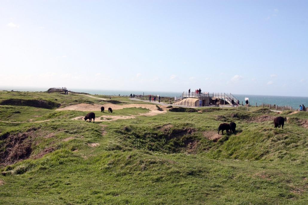 Schapen bij bunkers bij Pointe du Hoc in Normandië Frankrijk.
