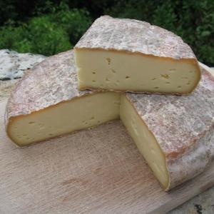 Saint-Nectaire kaas uit de Auvergen, Frankrijk